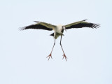 Wood Stork with Lift Tabs Deployed
