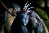 Louisiana Heron Trying to Look Scary