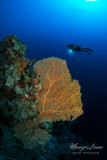 La grande gorgonia , The big sea fun