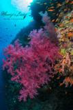I colori del reef , Reef's colors