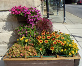 Flowering Plants for the planter box