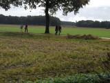 013_waalwijk-50jaar.jpg