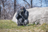 Detroit Zoo 2018