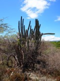 Cerca De La Desembocadura Del Rio Yaque Del Sur En Barahona, Rep. Dom.