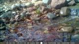 Trail Camera Captures