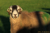 Happy to see ewe