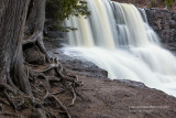 Gooseberry Falls, close up with roots