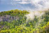 Fog over spring forest