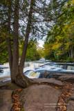 Tree at upper cascades of Bond Falls