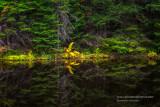 Golden Fern