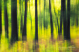 Old growth forest, abstract