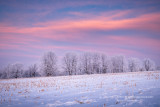 Colors of dawn with frosted trees