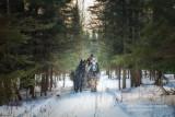 Sleigh ride through the spruce trees