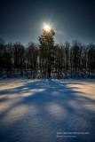 Pine tree illuminated