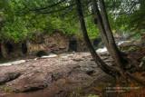 Cedar Trees along Fifth Falls 1