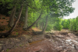 Cedar Trees along Fifth Falls 2