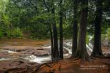 Cedar trees along Upper Falls