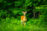 A young buck visiting