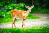 A young buck visiting 2