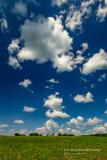 A perfect summer sky