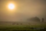 Foggy morning in rural Wisconsin