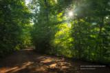Sun peeking through trees