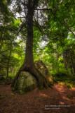 Friendship Tree