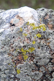 Lichen on Quartz