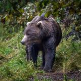 Alaska and British Columbia - 9/2017