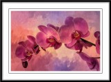 Pink Orchids....