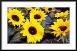 Sunflowers...