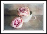 Two pink roses.....