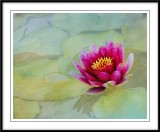 Walters water lily revisited....