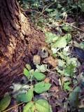 Beleaguered Fungi