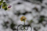 Cold Flora