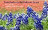 2017 Texas Wildflower Report