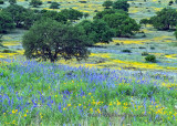 Texas Wildflower Report 2017