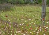 Wildflower Scene