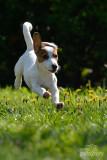 Hondenfotografie-2017001.jpg