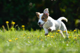 Hondenfotografie-2017002.jpg
