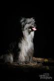 Hondenfotografie-2017007.jpg