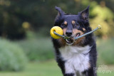 Hondenfotografie-2017011.jpg
