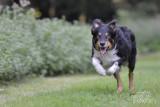 Hondenfotografie-2017012.jpg