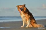 Hondenfotografie-2017013.jpg