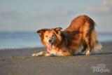 Hondenfotografie-2017016.jpg