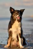 Hondenfotografie-2017018.jpg