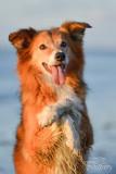 Hondenfotografie-2017024.jpg
