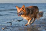 Hondenfotografie-2017025.jpg