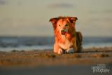 Hondenfotografie-2017026.jpg