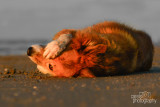 Hondenfotografie-2017027.jpg